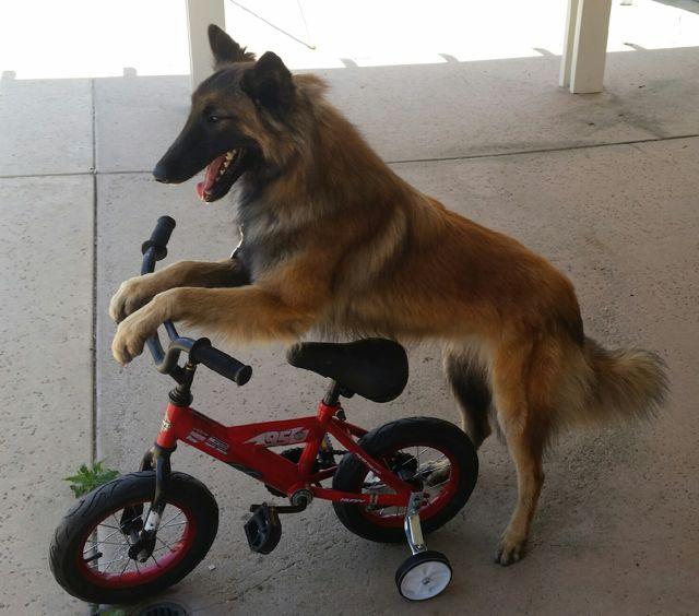 Ray.bike